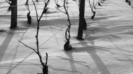 chassagne-montrachet-sous-la-neige-Vincent Dancer