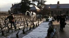 décoration dans les vignes de Chassagne-Montrachet