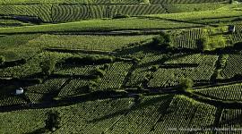 Les terroirs de Bourgogne: Pommard - photographie d'Aurélien Ibanez
