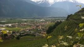 Vignes en terrasses de Fully e n Suisse