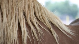Fête du cheval à Villers-Pol 59