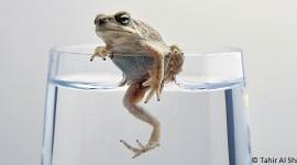 Omani Frog par Tahir Al Shabibi  cc: by-nc-sa/2.0/