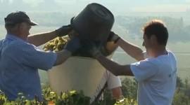 Coche-Dury Vendanges tiré du film de Laurent Maillefer pour Lotel du Vin