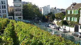 800px-Vigne_de_Montmartre par Basile Creative Commons Attribution-Share Alike 3.0 Unported, 2.5 Generic, 2.0 Generic and 1.0 Generic