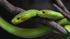 Green Mambas par orestART CC : by-sa/2.0/