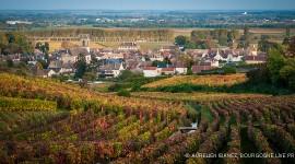 Pommard l'automne par Aurélien Ibanez
