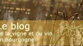 Millésime-Blog